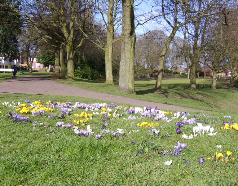Photo of Netherton Park flowers