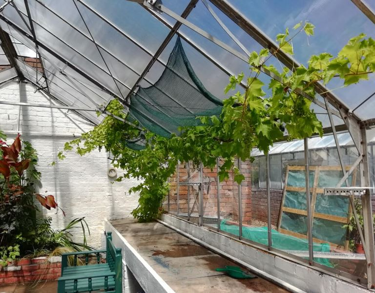 Photo of Dudley Mind Greenhouses at Wollescote Park
